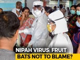 Video : Nipah Virus That Killed 12 In Kerala May Not Be Linked To Bats