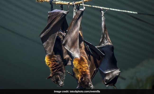 Brain-Damaging Nipah Virus Creates Havoc In India As Death Toll Rises