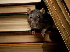 Burglar Alarm Goes Off In UP Bank. Culprit - Rats
