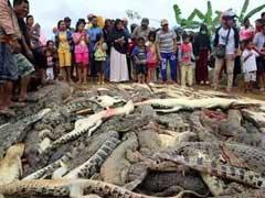 लोगों ने इस तरह लिया मौत का बदला, मार डाले 300 मगरमच्छ