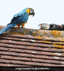 Sassy Parrot Curses Firefighter Trying To Rescue Her From London Roof