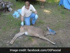 """Poachers Slaughtered Hundreds Of Animals In Pacific Northwest For """"Thrill,"""" Police Say"""
