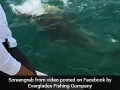 In Incredible Video, Giant Fish Swallows Shark As Shocked Fishermen Watch