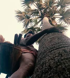 சென்னை கடற்கரையில் பனை நடு விழா!