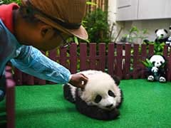 Four-Month-Old Panda Cub Makes First Public Appearance At Malaysia Zoo