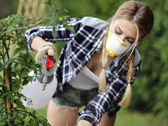 किचन गार्डन को नहीं लगेगी कीड़ों की नजर, अगर इस्तेमाल करेंगे ये घरेलू कीटनाशक
