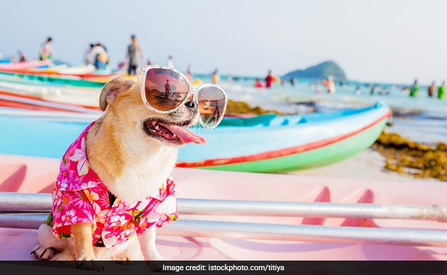5 Tips To Remember For An Epic Vacation With Your Pet