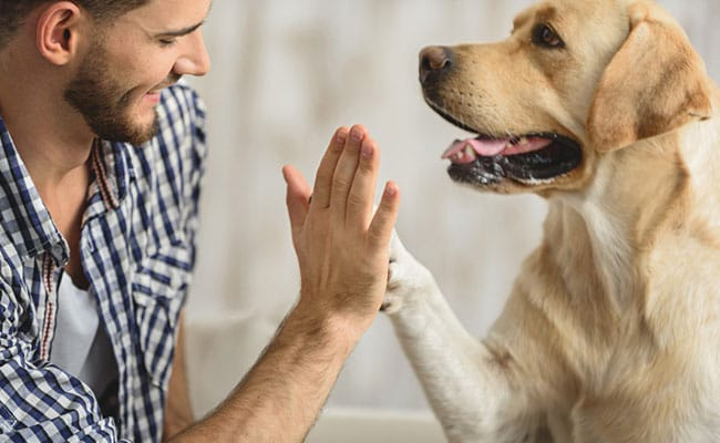 Pet Therapy: 7 Reasons Why You Should Keep A Pet