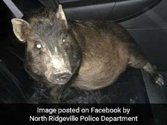 'He Was Being Followed By A Pig And Didn't Know What To Do.' So He Called 911.