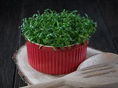 शाकाहारी लोगों के लिए Good News, ये पौधा पूरी करेगा विटामिन B12 की कमी