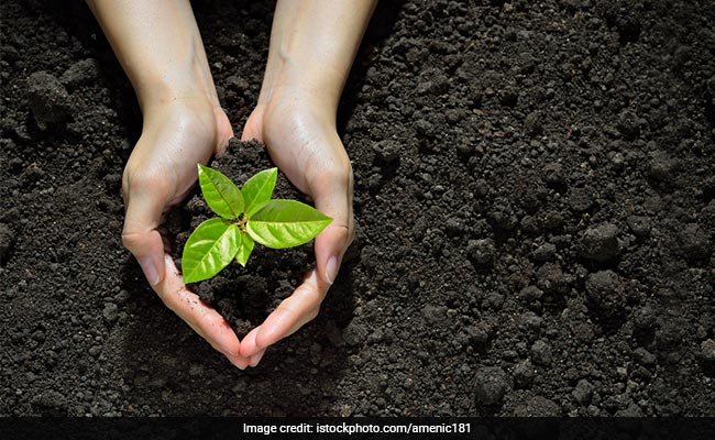 CBSE's One Child One Plant Campaign To Sensitize Students About Environment