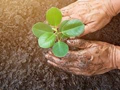 हरियाणा सरकार की पहल, एक पेड़ लगाने पर स्टूडेंट्स को मिलेंगे 50 रुपये