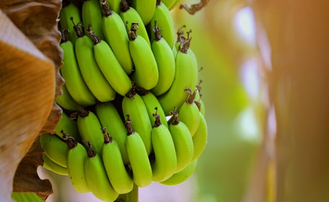 Raw Bananas For Diabetes: Health Benefits Of Raw Bananas You Must ...