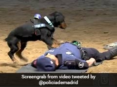 Police Dog Tries To Revive Trainer, Is Internet's New Hero. Watch