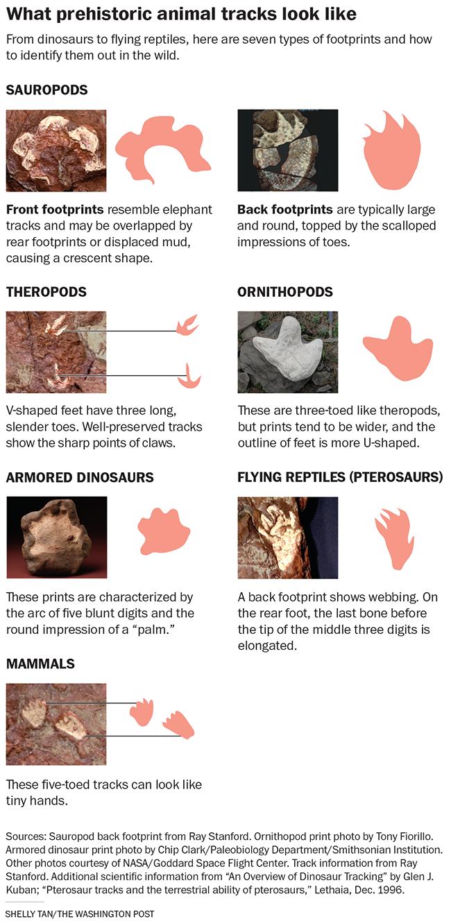 prehistoric animal tracks wp