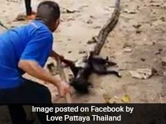Massive Python Strangles Dog In Horrifying Video. But Watch Till The End