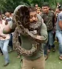 Bengal Forest Ranger Posed With Captured Python. Snake Had Other Ideas