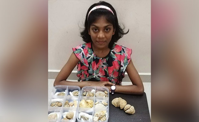 On Teachers' Day, 11-Year-Old 'Fossil Researcher' Shows Her Small Museum