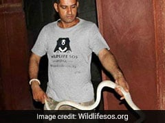Six-Foot Snake Found At UNESCO World Heritage Site Agra Fort