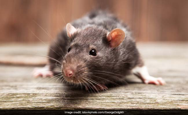 Report A Rat: Real-Time Map To Plot Paris Rodent Sightings
