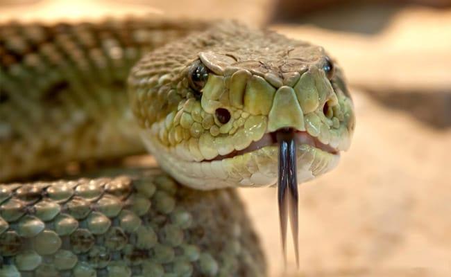 then dead snakes severed head bit him