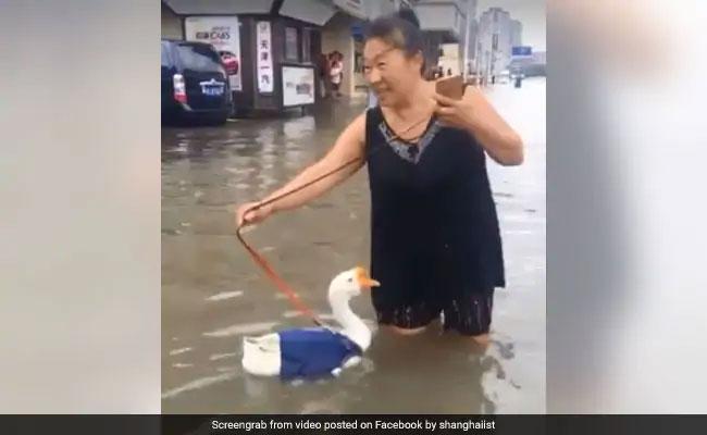 बारिश के कारण रोड बन गई नदी तो महिला ने बतख को घुमाया, देखें Viral Video