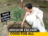 Video: How Radhika Anand's Mission Fal-Van Is Increasing India's Green Cover