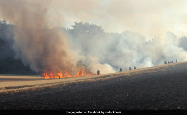 Burning Bird Falls Down From Wire, Sets 17 Acres Of Land On Fire