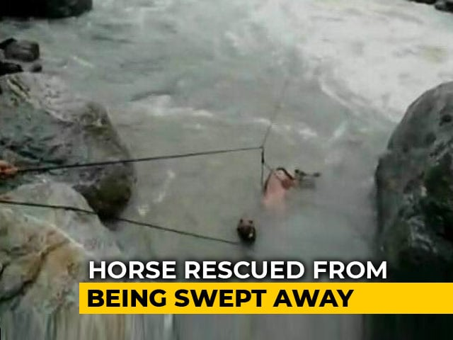 Video : Officials Rescue Horse Being Swept Away By Fast Flowing River