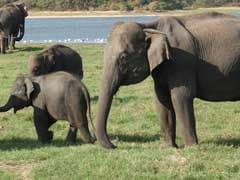 Elephant Herd Rescued After Killing 2 In Madhya Pradesh's Sidhi