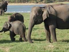 58 Elephants Killed On Railway Tracks In Last 3 Years, Says Centre