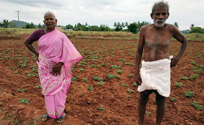 salem farmer