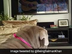 सलमान खान के डॉगी ने 'सेल्फिश' गाने के साथ किया कुछ ऐसा, फोटो हुई वायरल