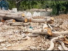 Centre's Plan To Chop 17,000 Trees Has Delhi Seething, Minister Trolled