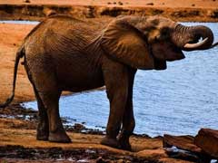 Elephant Stuck In Kerala Flood Rescued After Shutting Dam's Sluice Gates