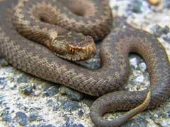 Snake Found While Officials At Meeting In Puducherry Airport VIP Lounge