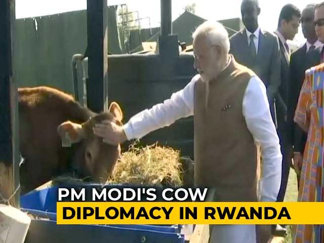 Video : India Donates 200 Cows For Rwandan Economic Development Project