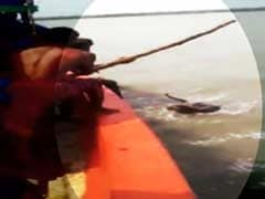 On Camera, Fishermen Poke Tiger In Sunderban River With Stick