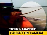 Video : On Camera, Fishermen Poke Tiger In Sunderban River With Stick
