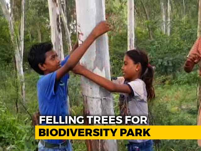 Video : Rakhis And Hugs For Trees As Noida Protests Destruction Of Its Green Belt