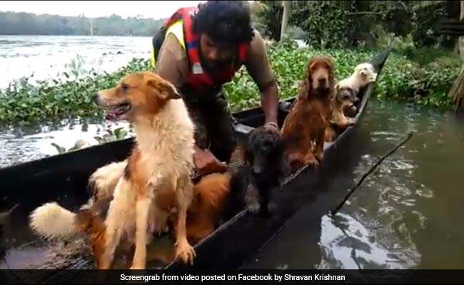 Viral: In Kerala, 18 Dogs And Their Owner Rescued From Flooded House