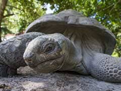 """Extinct"" Galapagos Tortoise Found After 100 Years"