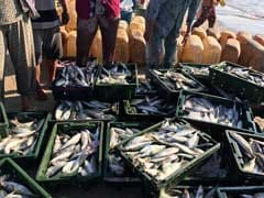 Formalin Scare: Checking Of Fish Withdrawn On Goa's Border
