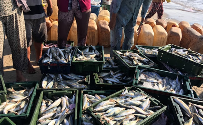 Kerala Food Safety Department Officials Siezes 9,600 Kg Of Toxic Fish