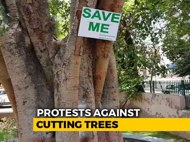 Video : Delhi Residents Win Battle To Save Trees, For Now