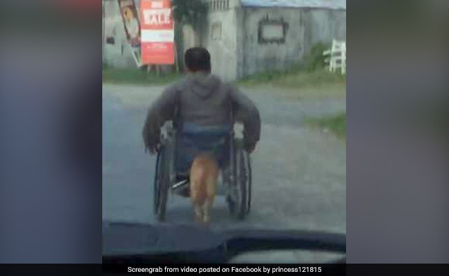 Dog Pushes Paralysed Owner's Wheelchair In Heartwarming Video