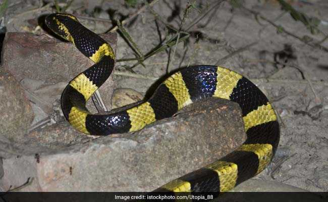 Venomous Snake Found In Passenger's Bag At Cochin Airport
