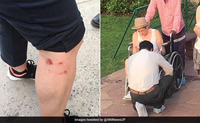 ताज महल का दीदार करने गए थे विदेशी टूरिस्ट, बंदरों ने कर दिया हमला