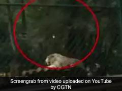 VIDEO: शेर को हिलाने के लिए शख्स मार रहा था पत्थर, उसका बाद हुआ कुछ ऐसा