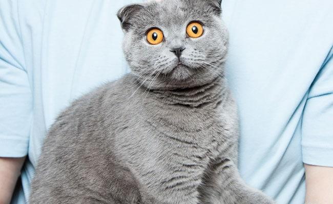 New Zealand के इस गांव में BAN होने जा रही हैं बिल्लियां, पीछे की वजह है हैरान करने वाली